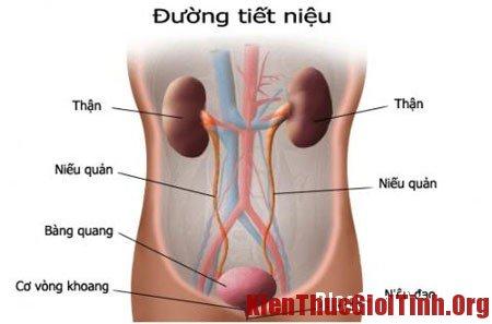 Triệu chứng bệnh viêm niệu đạo ở nam giới