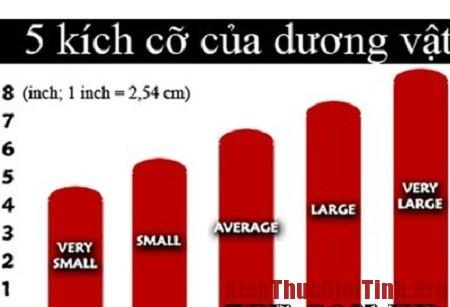 Hướng dẫn đo kích thước dương vật