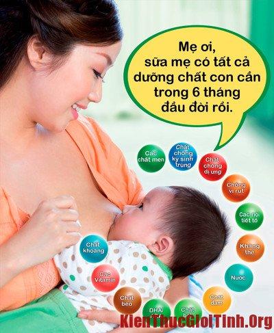 Thực phẩm có nhiều sữa cho bà bầu sau khi sinh