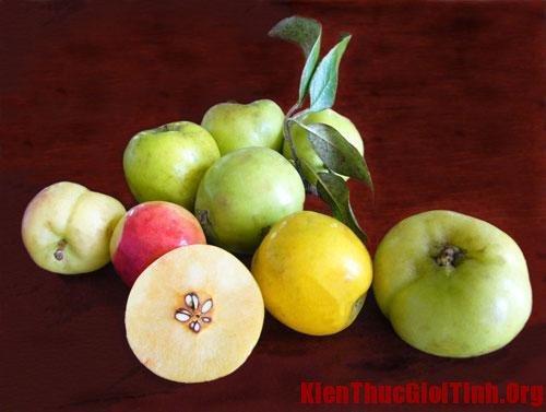 Nguyên liệu làm giấm táo